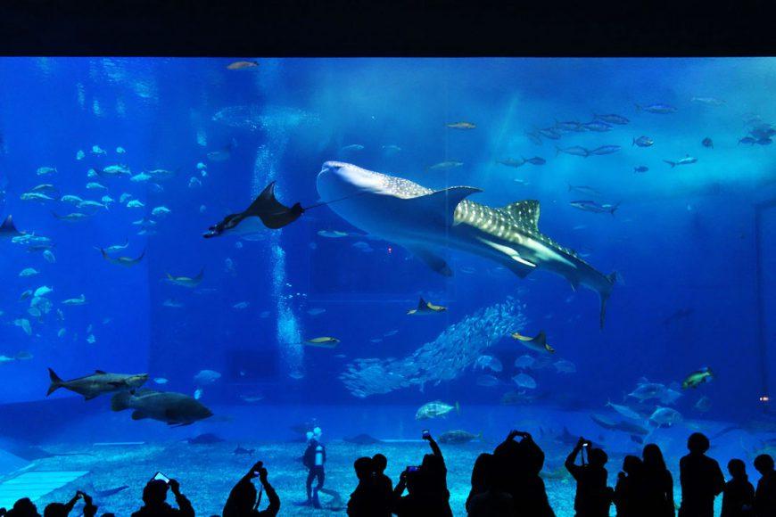 Aquarium géant de Motobo