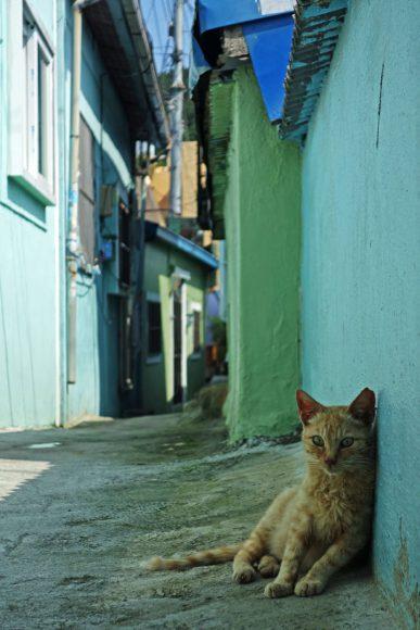 Trop chaud pour les chats